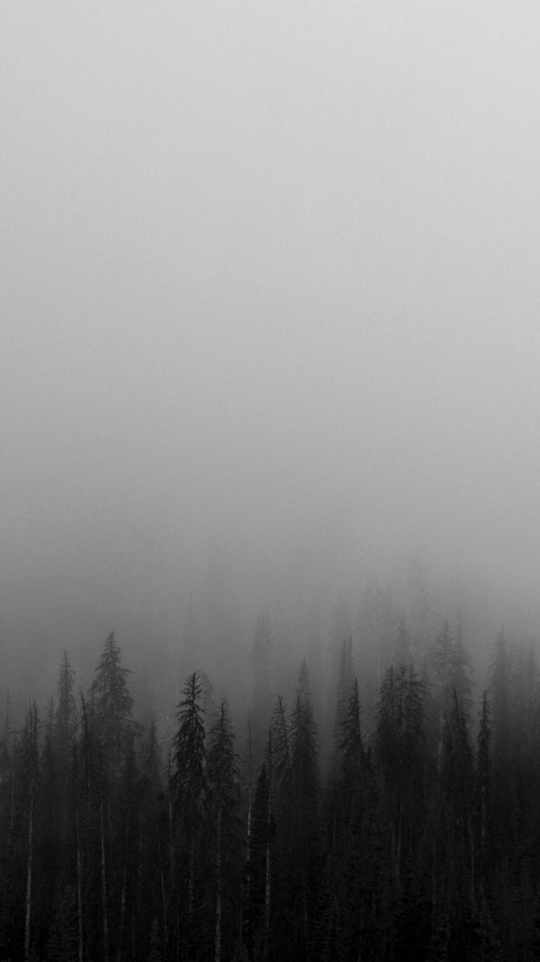 blackandwhitemistforestswallpaper iphone wallpapers