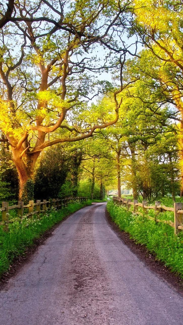 Great Britain nature road iPhone Wallpaper iphoneswallpapers com