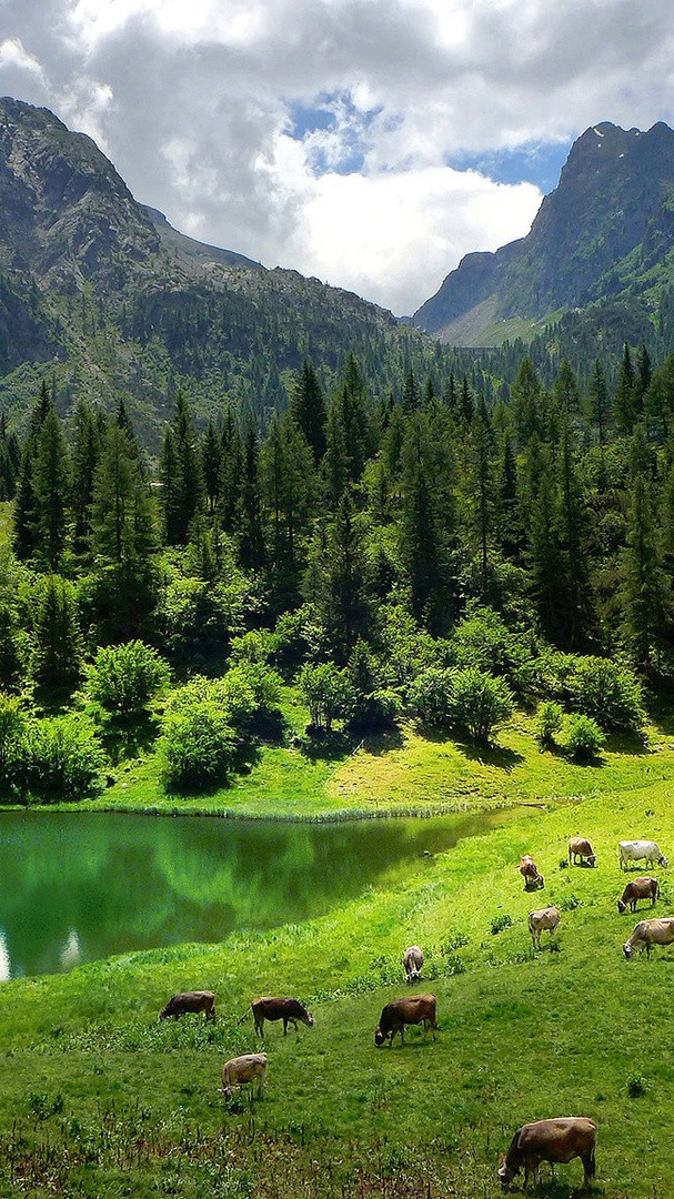 Landscape Nature Pine Trees Alps Mountains iPhone Wallpaper iphoneswallpapers com