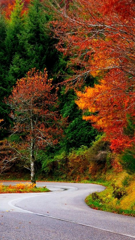 Forest Autumn Fall Road Leaves Trees Colorful Nature IPhone Wallpaper