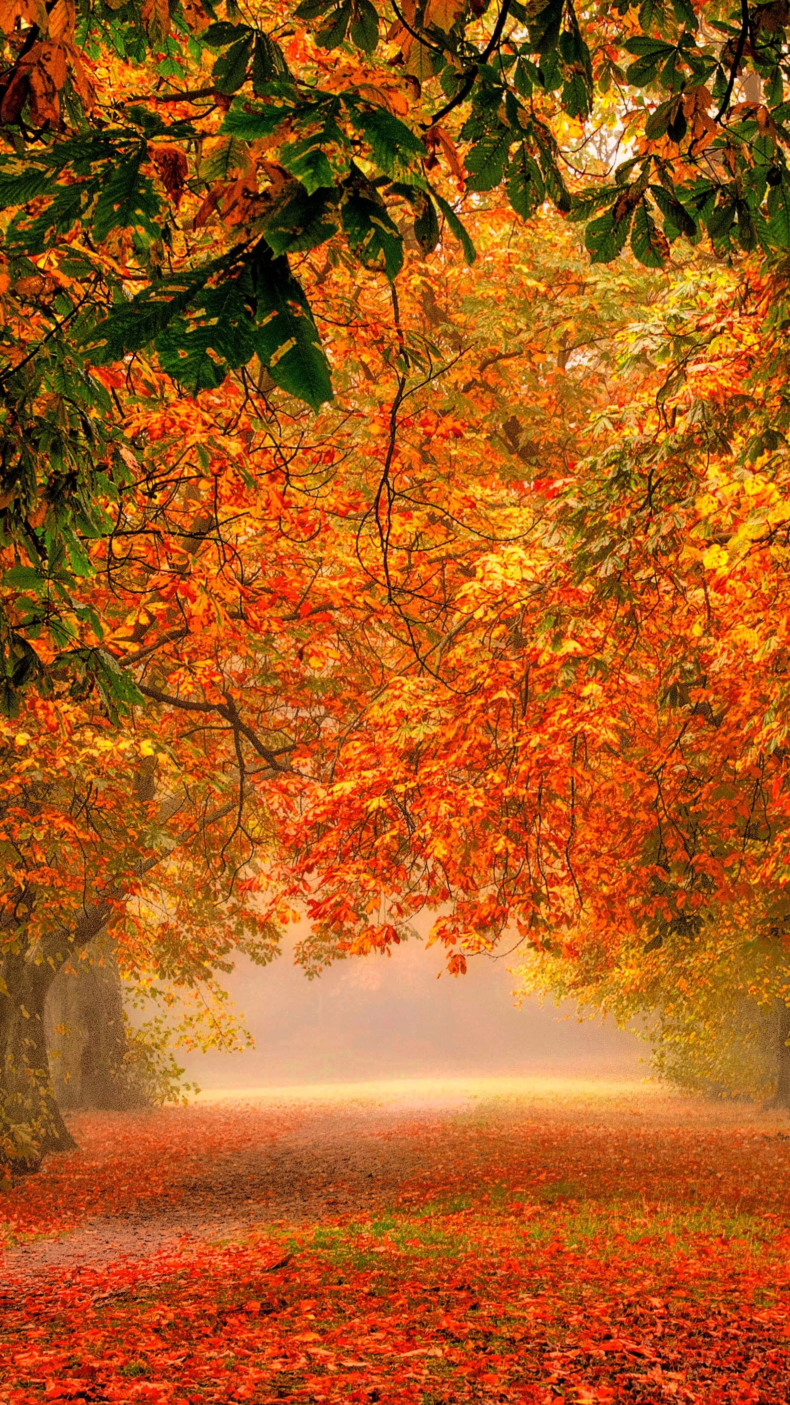 Wallpaper Focus >> forest-nature-park-colorful-leaves-iPhone-Wallpaper - iPhone Wallpapers