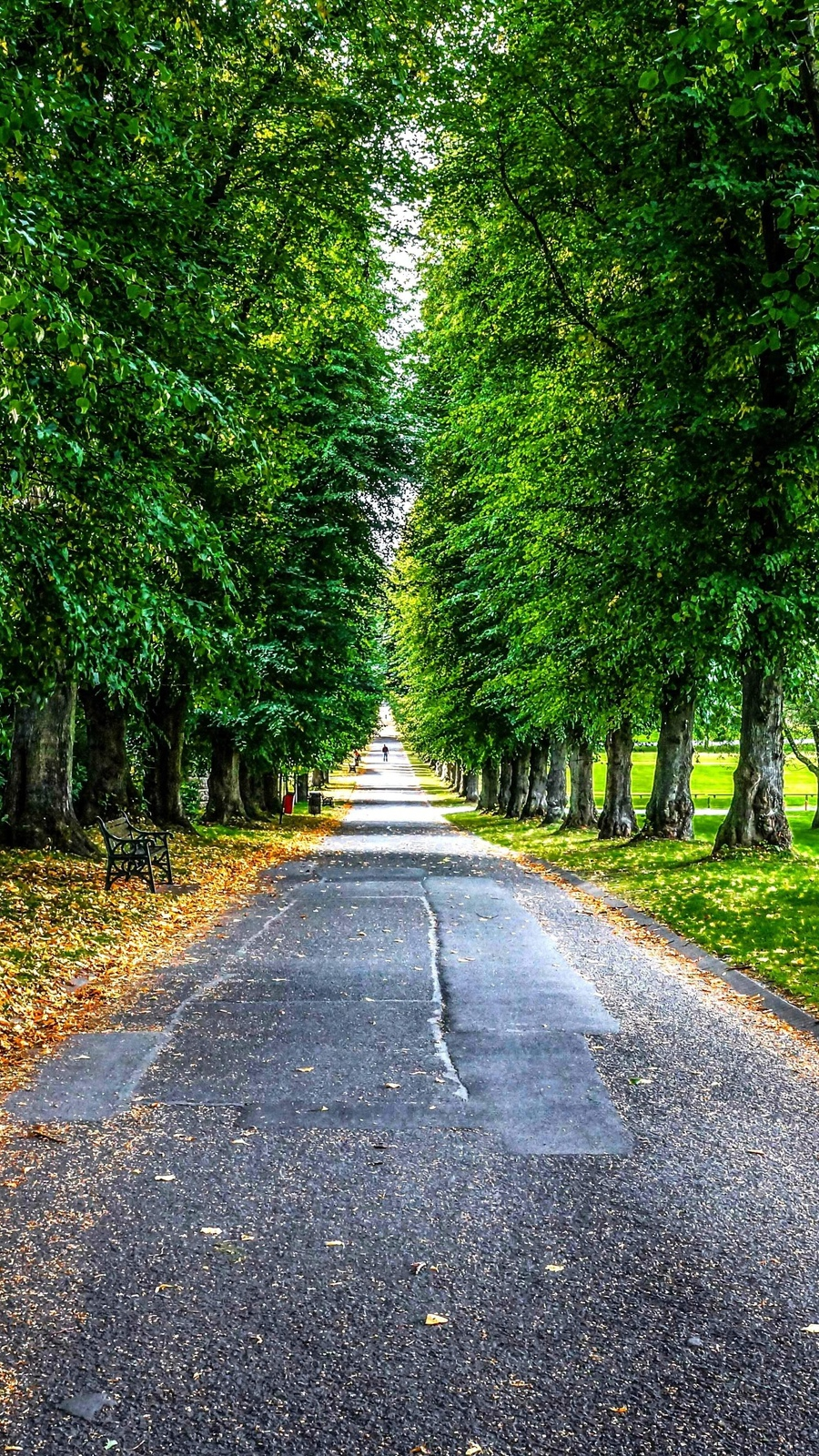 park-trees-road-landscape-iPhone-Wallpaper - iPhone Wallpapers