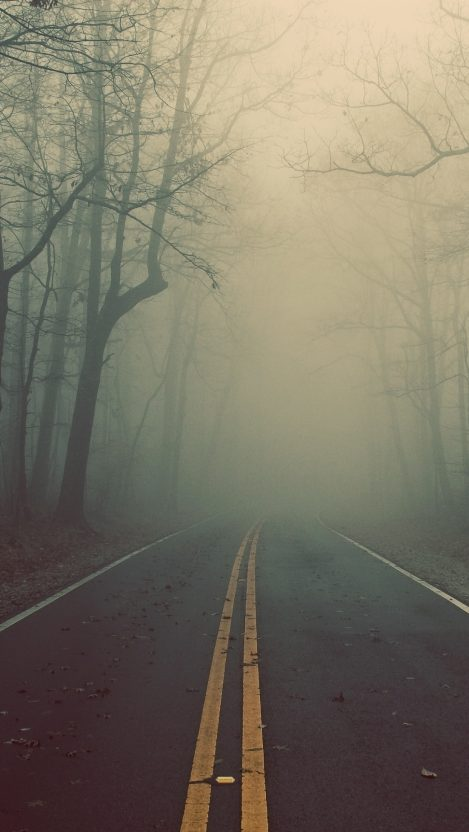 road trees forest fog iPhone Wallpaper iphoneswallpapers com