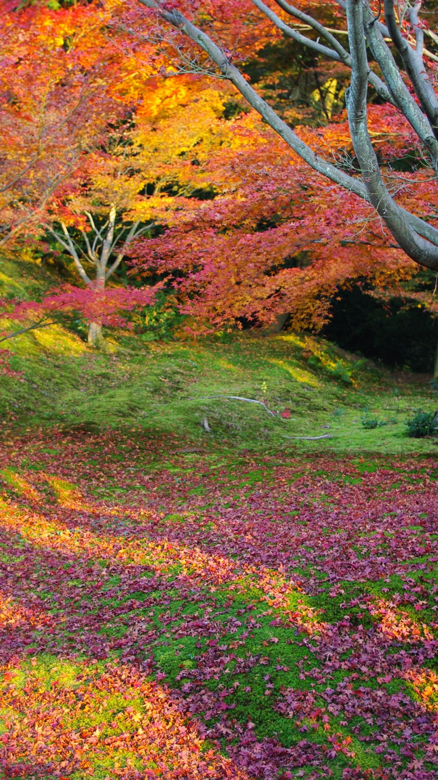 Colorful Leaves Tree Wallpaper iPhone Wallpaper iphoneswallpapers com