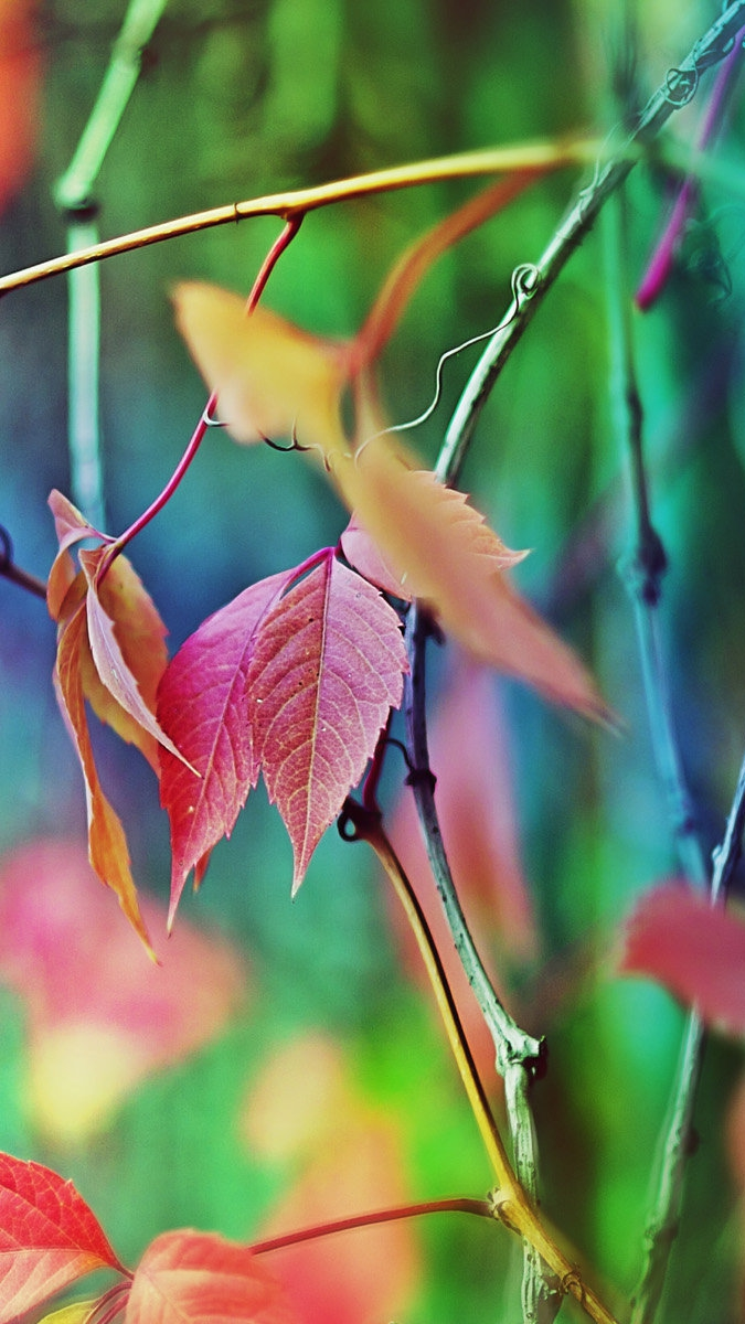 Colorful Tree Leaves iPhone Wallpaper iphoneswallpapers com