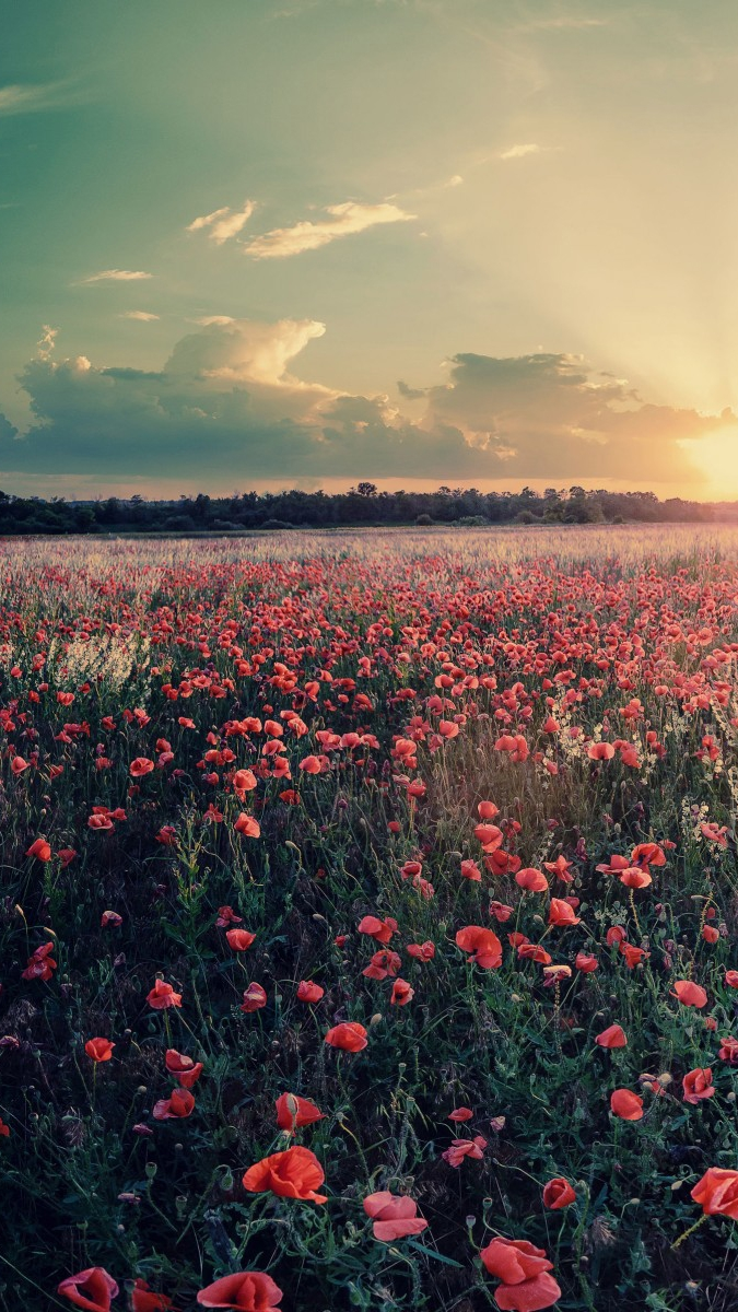 Lake Forest Sports Cars >> Flowers-Farms-Sunshine-Sunset-iPhone-Wallpaper - iPhone ...