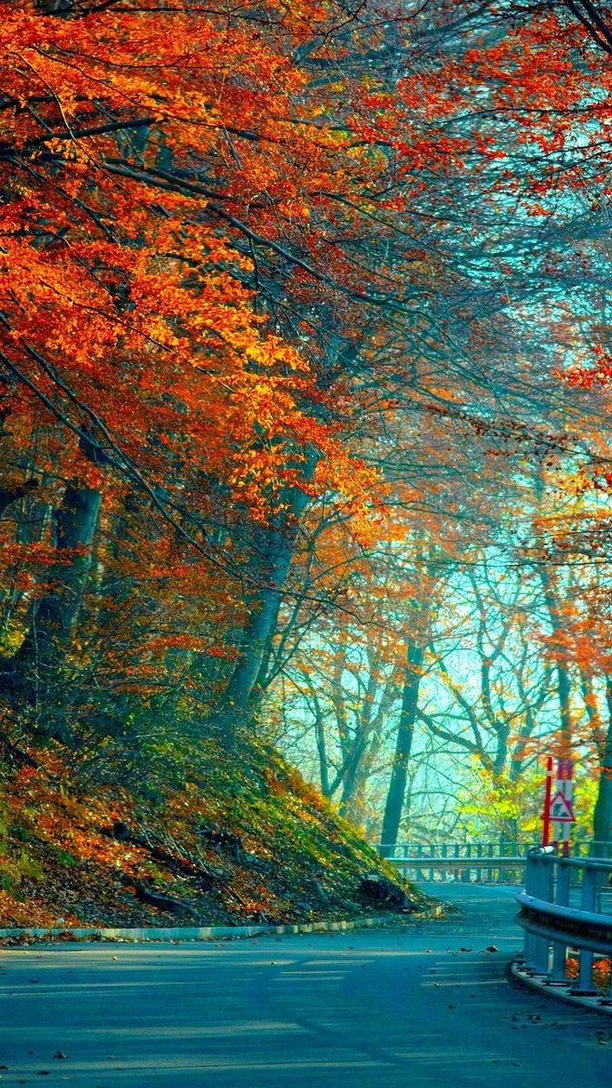 Maple Leaf Trees Road iPhone Wallpaper iphoneswallpapers com