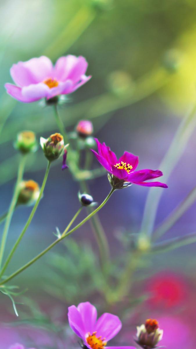 Mini colorful Flowers iPhone Wallpaper iphoneswallpapers com