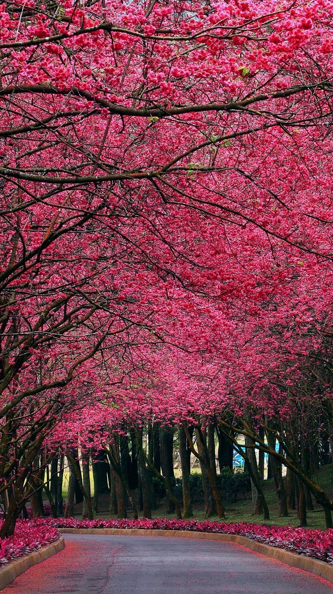 Pink Flowers Autumn Trees Park iPhone Wallpaper iphoneswallpapers com
