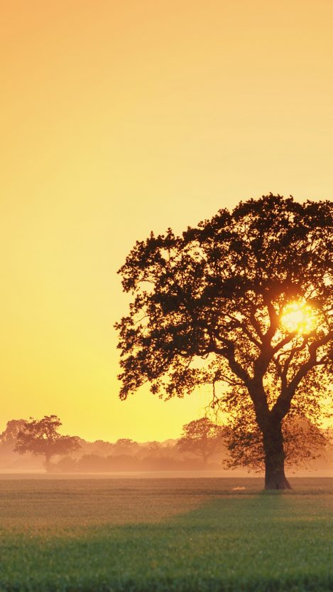 Sunset iPhone Wallpaper iphoneswallpapers com