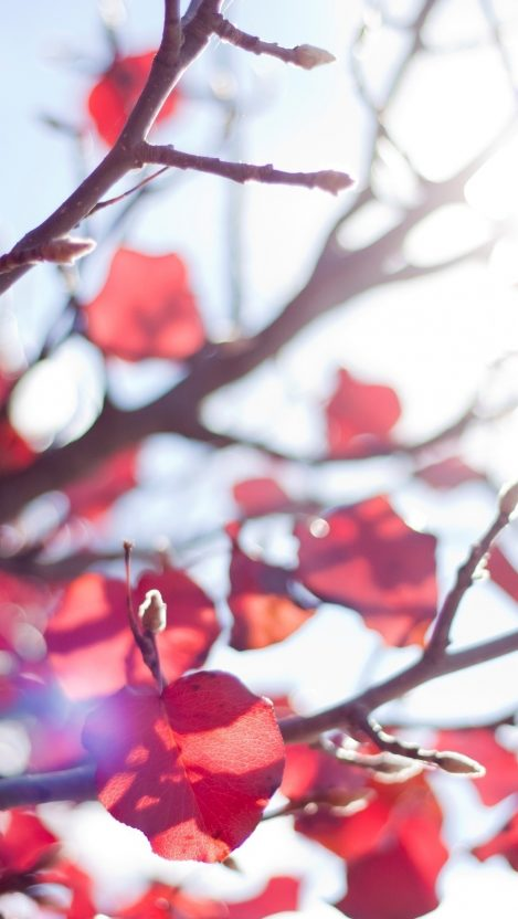 branches leaves autumn light sun rays iPhone Wallpaper iphoneswallpapers com