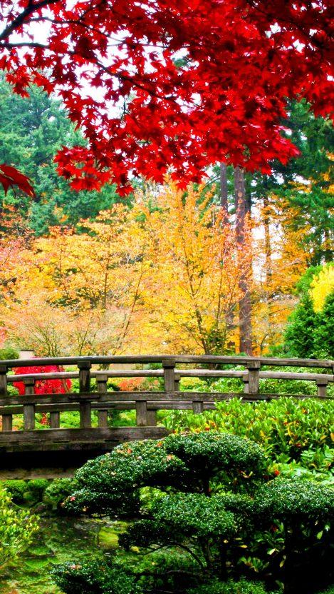 bridge trees Garden iPhone Wallpaper iphoneswallpapers com