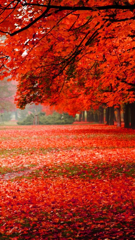 foliage autumn park nature iPhone Wallpaper iphoneswallpapers com