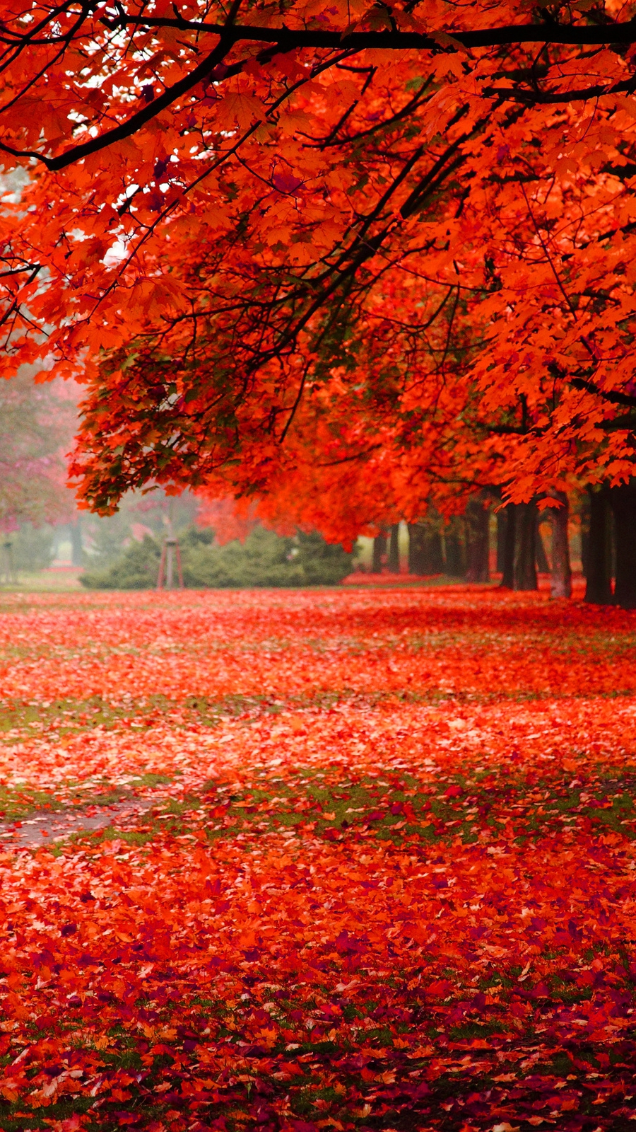 Foliage-autumn-park-nature-iPhone-Wallpaper - iPhone ...
