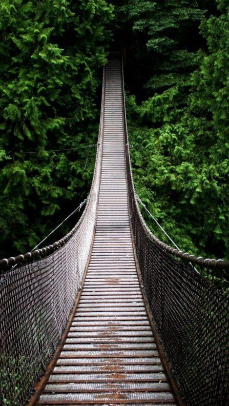 Man Made Walking Bridge in Forest iPhone Wallpaper iphoneswallpapers com