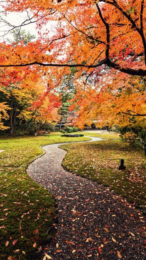 Maple Trees Park iPhone Wallpaper iphoneswallpapers com