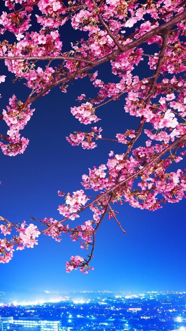 Pink Wallpaper Backgrounds Desktop Wallpapers