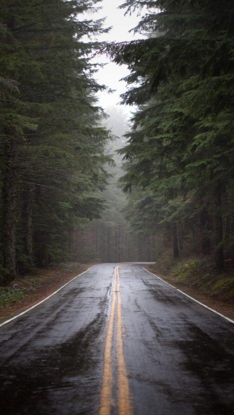 Tree Road iPhone Wallpaper iphoneswallpapers com