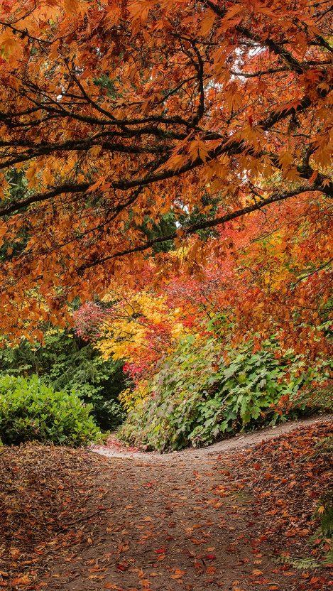 Washington Park Arboretum Seattle iPhone Wallpaper iphoneswallpapers com