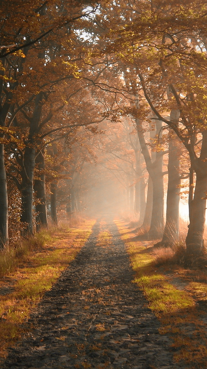 trees foliage fog road iPhone Wallpaper iphoneswallpapers com