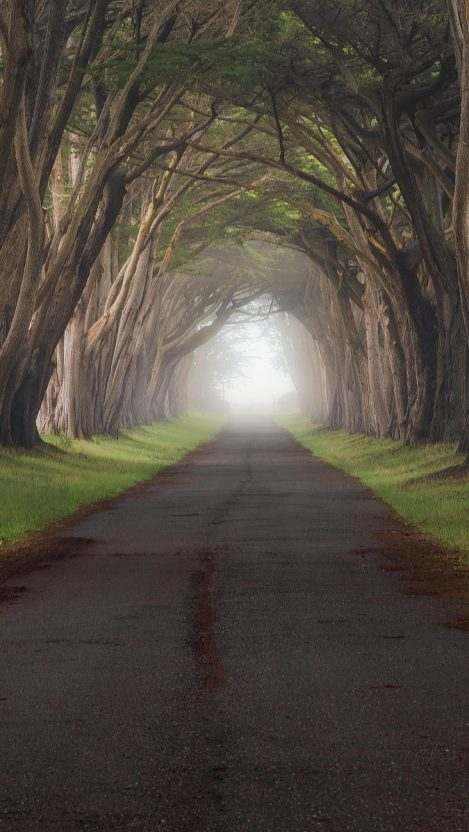 trees grass fog tunnel Point Reyes California iPhone Wallpaper iphoneswallpapers com