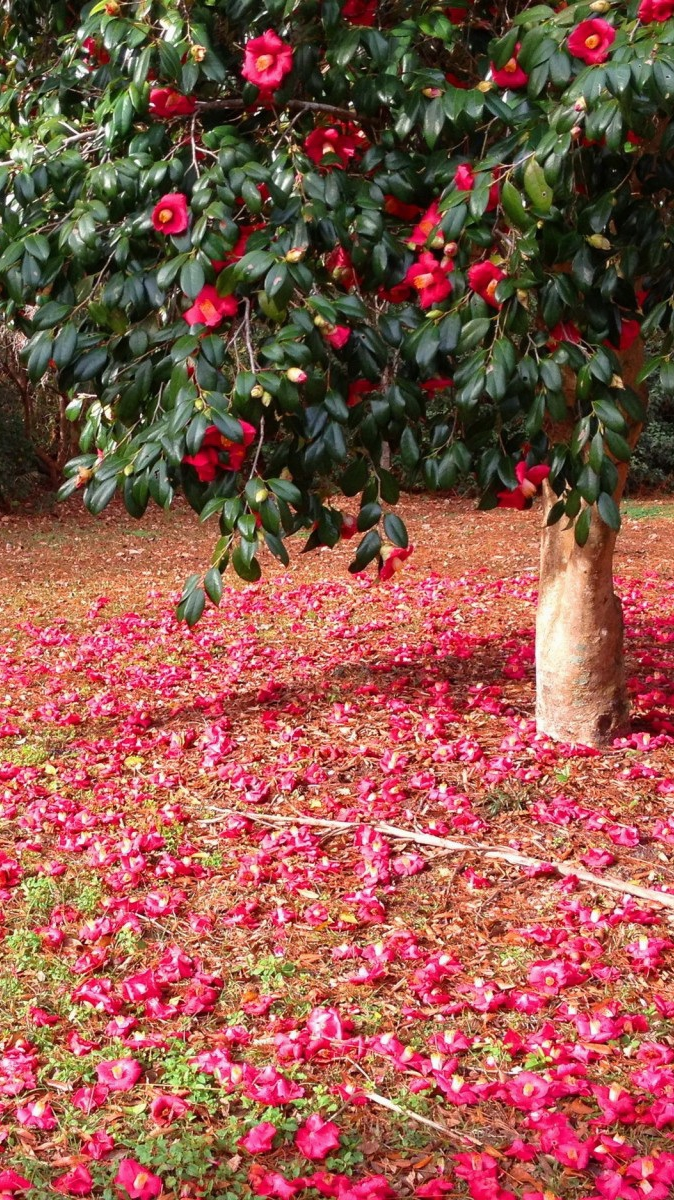 Red Flowers Tree iPhone Wallpaper iphoneswallpapers com