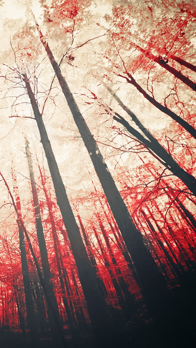 Red Trees Sunshine iPhone Wallpaper iphoneswallpapers com