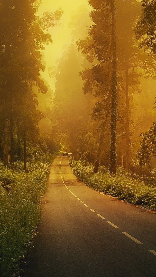 Road to Forest iPhone Wallpaper iphoneswallpapers com