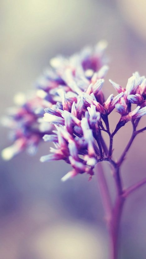 Tiny Flowers Plant iPhone Wallpaper iphoneswallpapers com