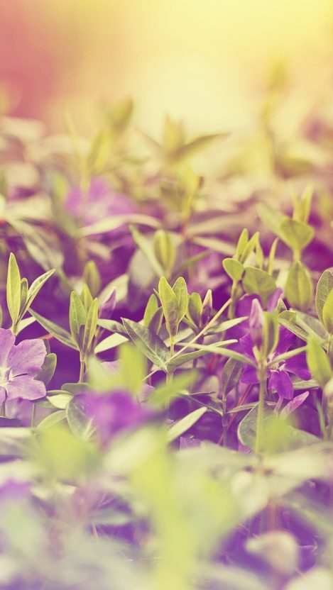 Tiny Plants iPhone Wallpaper iphoneswallpapers com