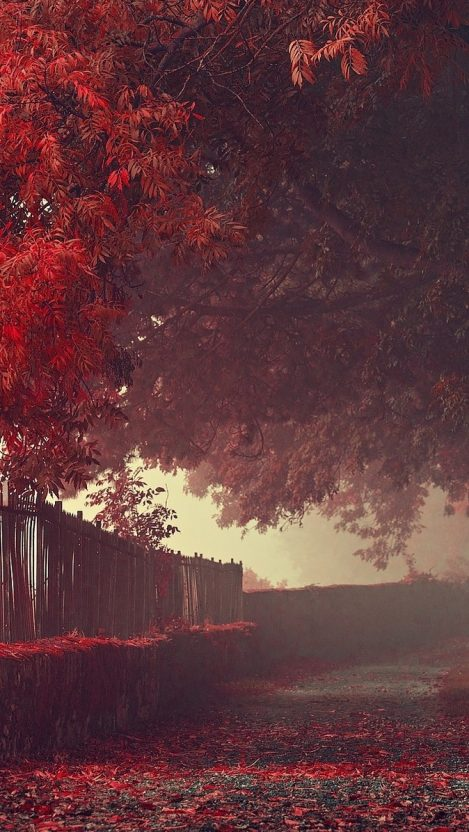 Amazing Autumn Wallpaper Red Leaf Trees iPhone Wallpaper iphoneswallpapers com