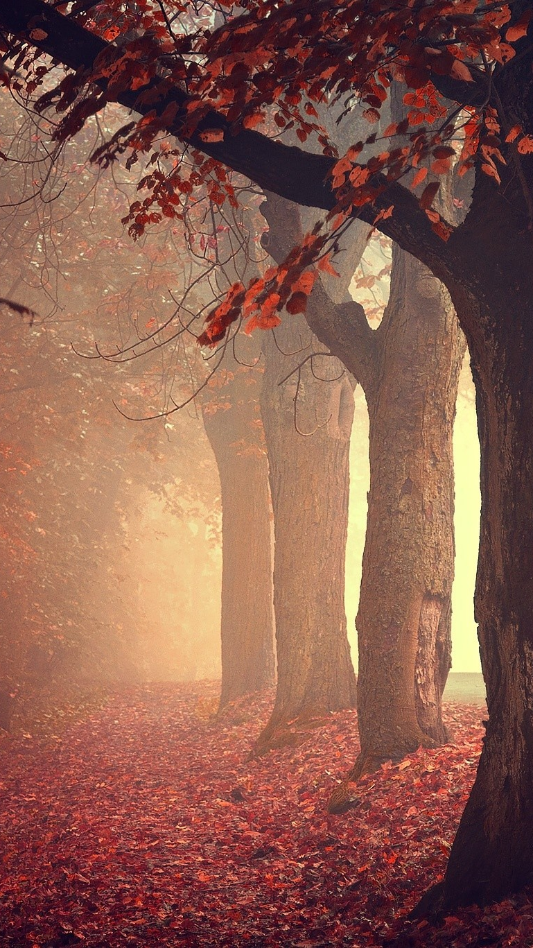 Autumn Forests Red Trees wallpaper iPhone Wallpaper iphoneswallpapers com