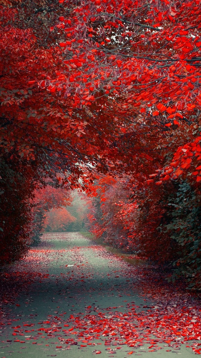 Autumn Red Leaves Road Wallpaper iPhone Wallpaper iphoneswallpapers com