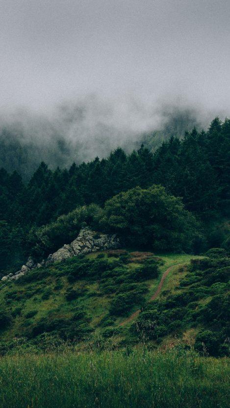 Beautiful Nature Green Forests iPhone Wallpaper iphoneswallpapers com