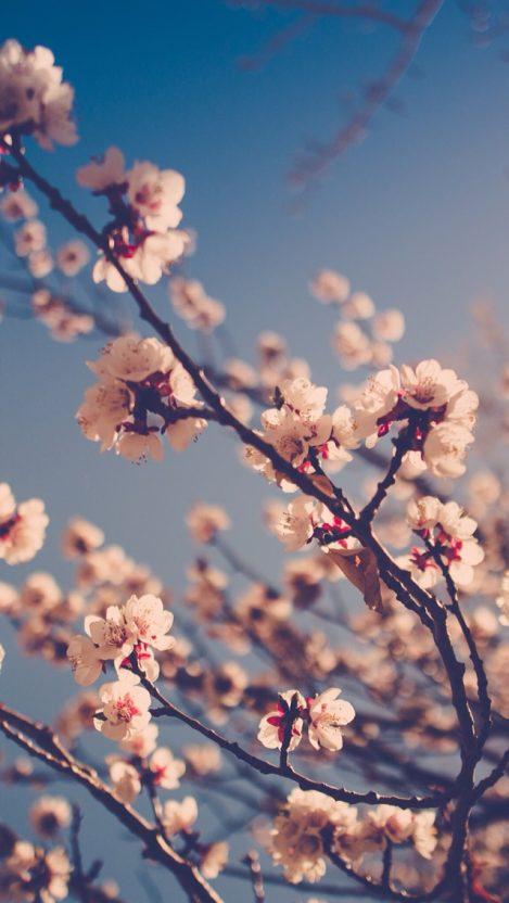 Beautiful White Flowers iPhone Wallpaper iphoneswallpapers com