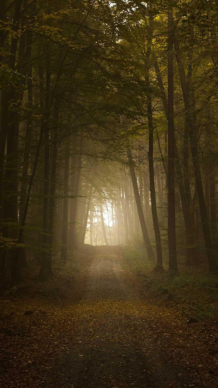 Dark Forest iPhone Wallpaper iphoneswallpapers com