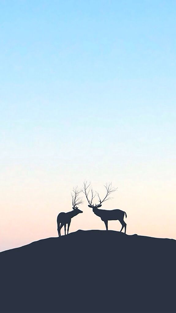 Deer iPhone Wallpaper iphoneswallpapers com