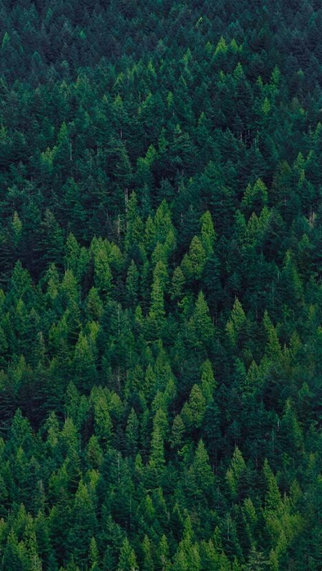 Green Forest Trees iPhone Wallpaper iphoneswallpapers com