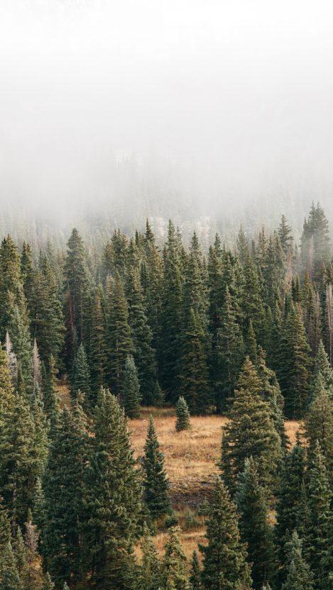 Mist Forest Green Trees iPhone Wallpaper iphoneswallpapers com