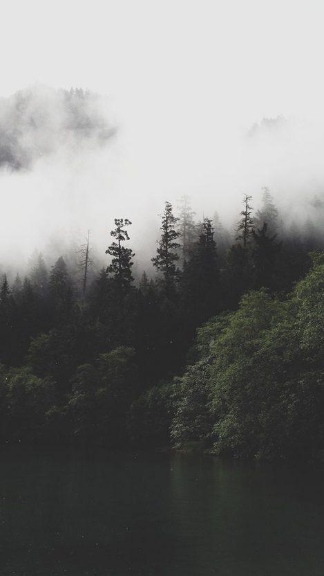 Mist Forests iPhone Wallpaper iphoneswallpapers com