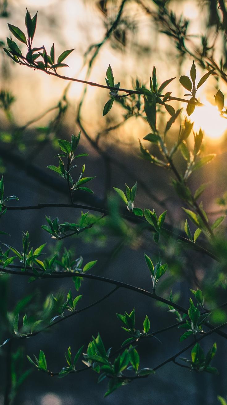 Nature Macro Plants Leaves iPhone Wallpaper iphoneswallpapers com