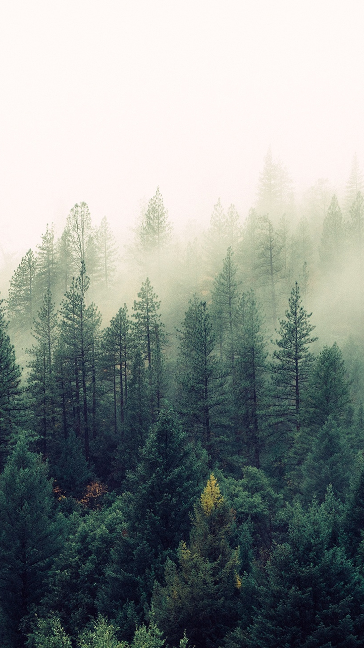 Nature mist forests trees iphone wallpaper iphone wallpapers - Pine tree wallpaper iphone ...