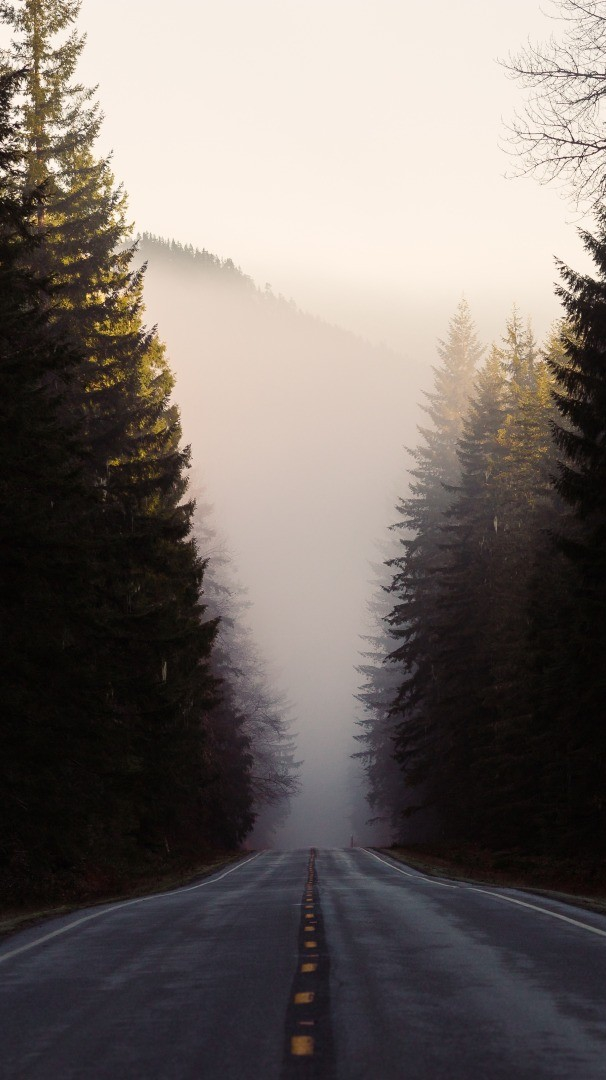Forest Road Fog Winter iPhone Wallpaper iphoneswallpapers com