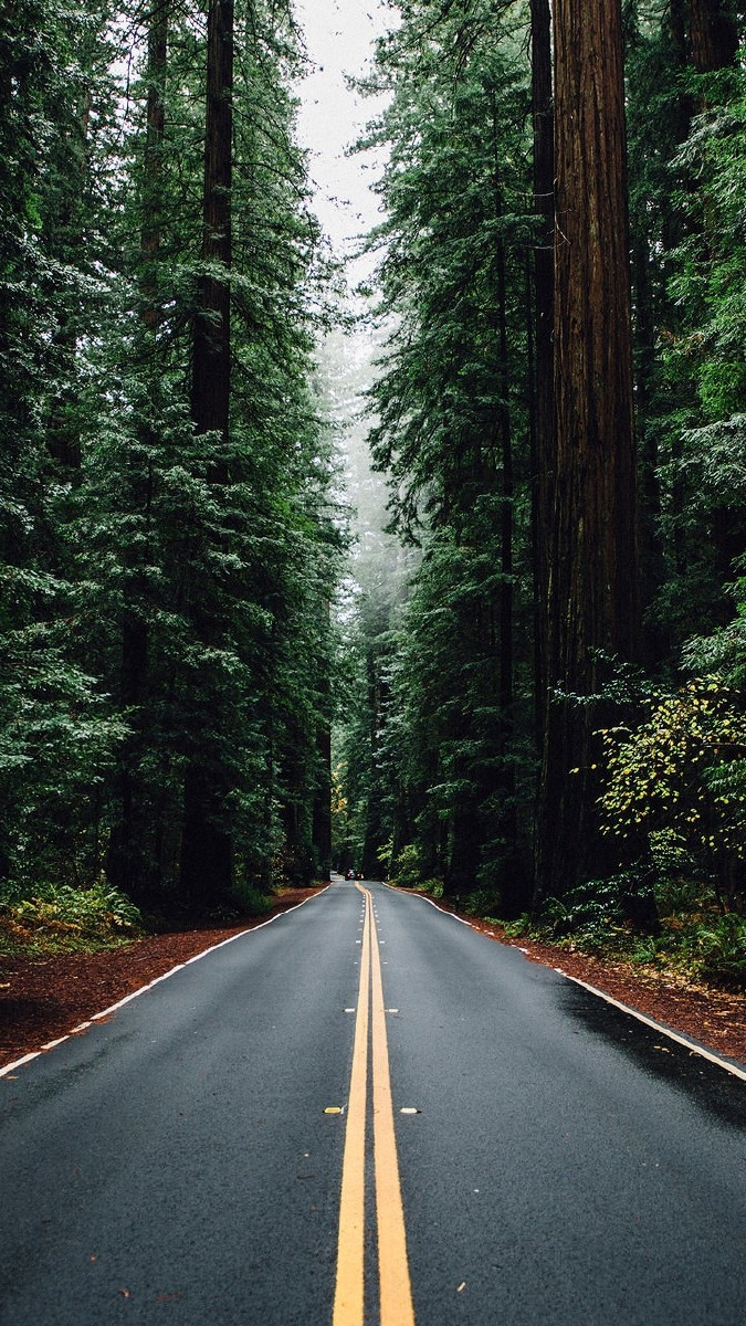 Green Big Trees Road USA iPhone Wallpaper iphoneswallpapers com