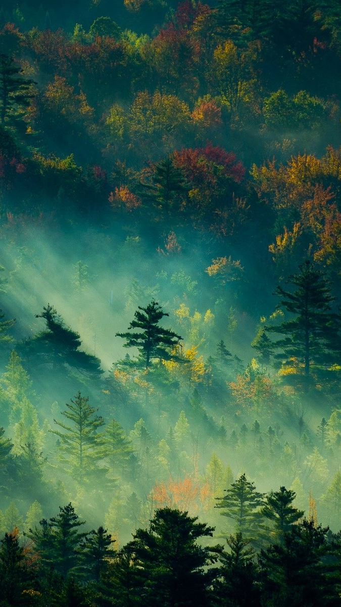 Morning Sunlight Mist Nature iPhone Wallpaper iphoneswallpapers com