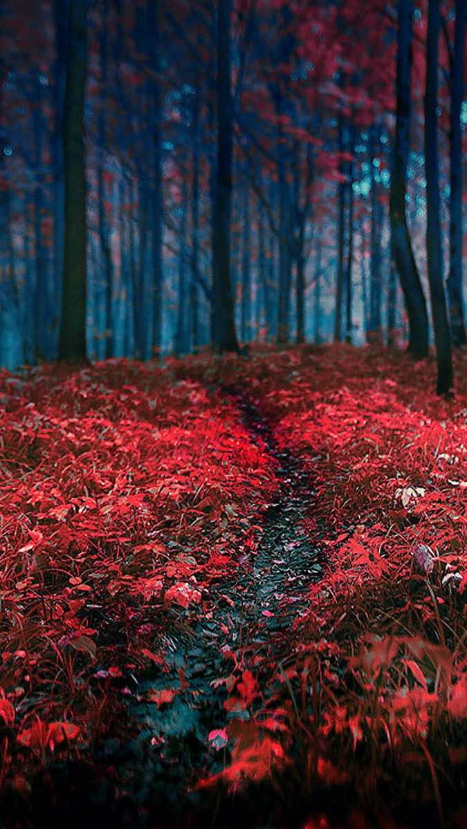 Red Plants in The Forest iPhone Wallpaper iphoneswallpapers com