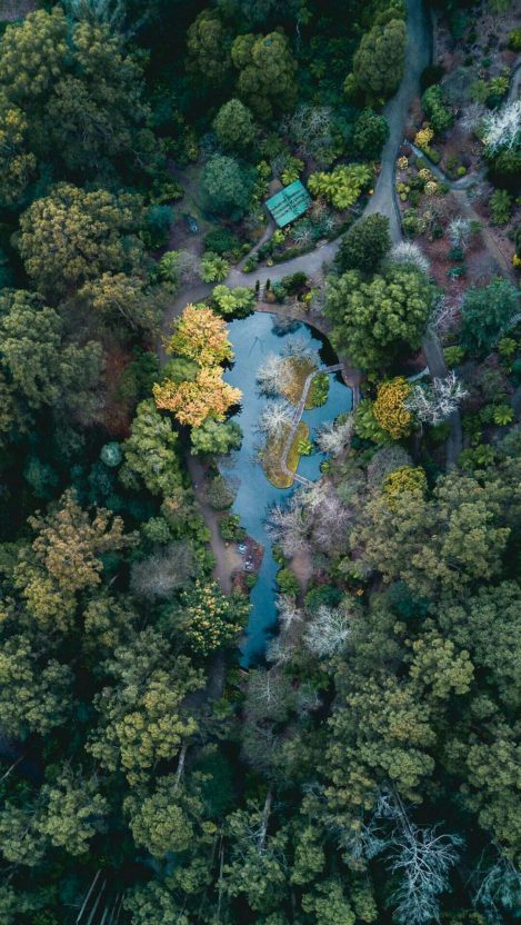 Aerial View of Forest iPhone Wallpaper iphoneswallpapers com