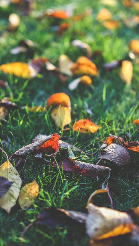 Autumn Leafs iPhone Wallpaper iphoneswallpapers com