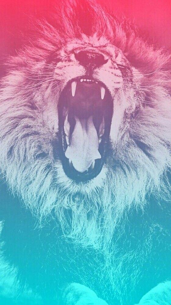 Lion Roar iPhone Wallpaper iphoneswallpapers com