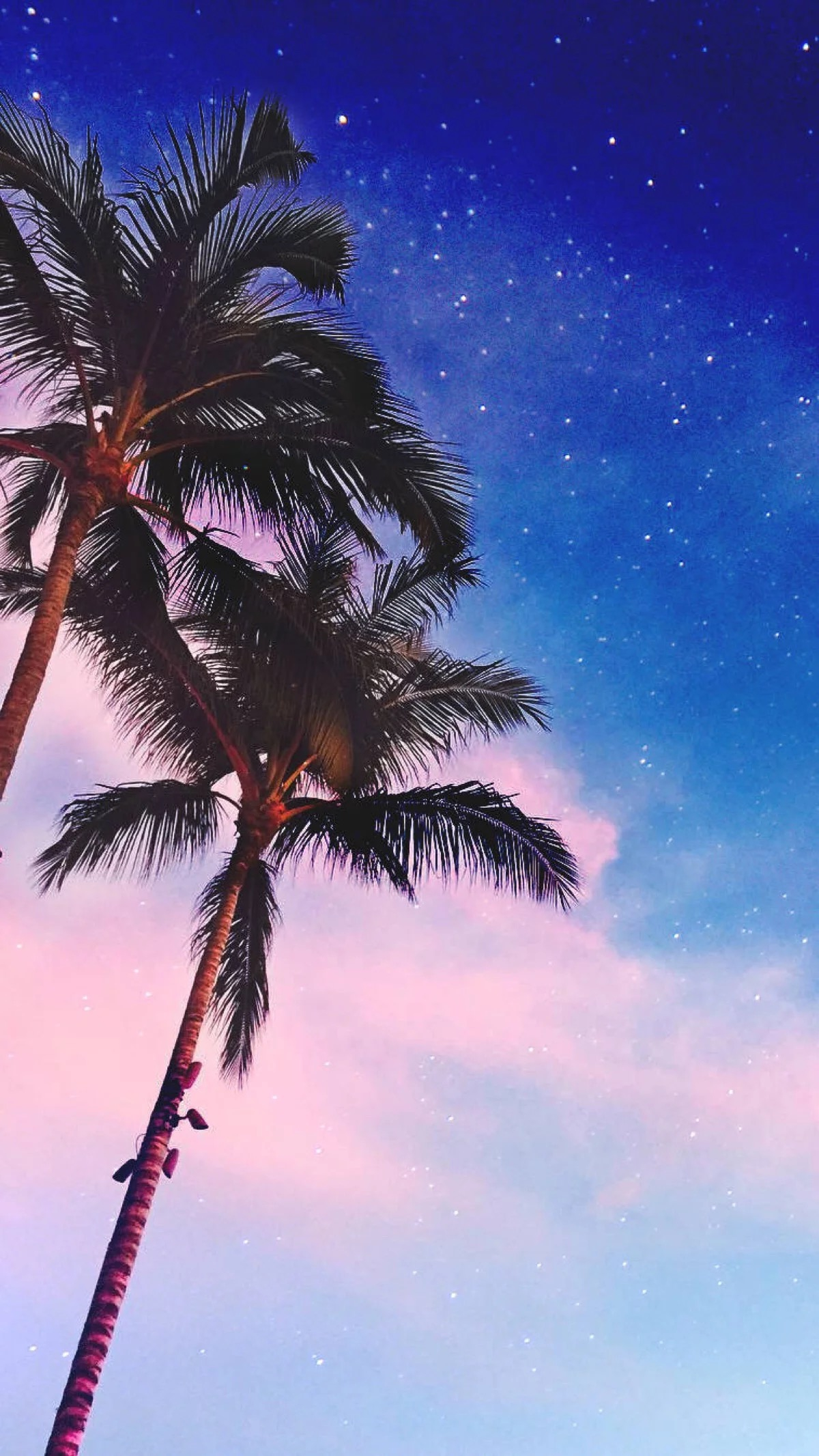 Palm Trees iPhone Wallpaper iphoneswallpapers com